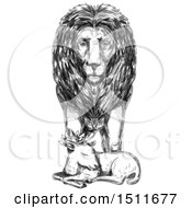 Clipart Of A Sketched Male Lion Guarding A Sleeping Lamb On A White Background Royalty Free Illustration