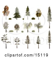 3d Trees And Shrubs Including Birch Oak Pine Fir And Willow With Fall Foliage Clipart Illustration
