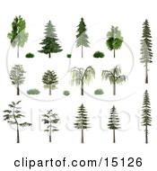 3d Trees And Shrubs Including Birch Oak Pine Fir And Willow With Summer Or Spring Foliage Clipart Illustration