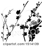 Clipart Of Black Silhouetted Blossom Branches Royalty Free Vector Illustration by AtStockIllustration