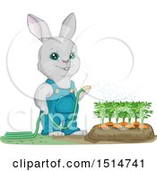 Clipart Of A Bunny Rabbit Gardener Watering Carrots Royalty Free Vector Illustration