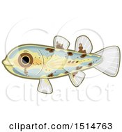 Cute Philippine Pandaka Pygmea Fish