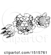 Clipart Of A Vicious Wildcat Mascot Shredding Through A Wall With A Golf Ball Royalty Free Vector Illustration