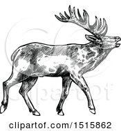 Clipart Of A Black And White Sketched Reindeer Royalty Free Vector Illustration by Vector Tradition SM