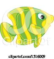 Tropical Marine Fish