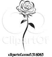 Black And White Single Rose