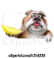 Clipart Of A 3d Bulldog Holding A Banana On A White Background Royalty Free Illustration