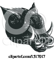 Razorback Boar Head In Black And White Woodcut