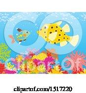 Boxfish And Xray Fish At A Coral Reef