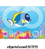 Powder Blue Tang Fish At A Reef