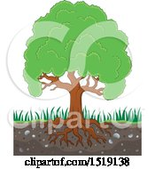 Clipart Of A Lush Mature Tree With Visible Roots In Soil Royalty Free Vector Illustration