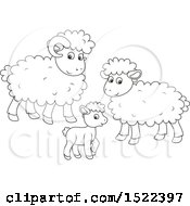 Black And White Sheep Family