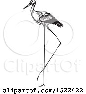 Clipart Of A Stork Bird Black And White Woodcut Royalty Free Vector Illustration