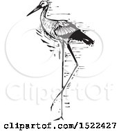 Beautiful Stork Bird Black And White Woodcut