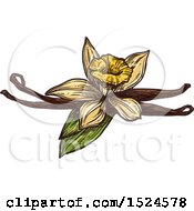 Vanilla Flower And Pods In Sketched Style