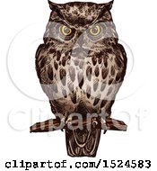 Clipart Of A Perched Owl In Sketched Style Royalty Free Vector Illustration