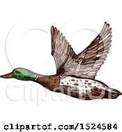 Clipart Of A Mallard Duck Flying In Sketched Style Royalty Free Vector Illustration by Vector Tradition SM