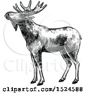 Clipart Of A Moose In Profile In Black And White Sketched Style Royalty Free Vector Illustration by Vector Tradition SM