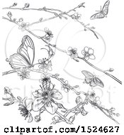 Clipart Of A Lineart Scene Of Cherry Blossoms And Butterflies Royalty Free Vector Illustration by AtStockIllustration