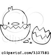 Cartoon Chick