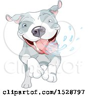 Clipart Of A Happy Pit Bull Dog Running And Drooling Royalty Free Vector Illustration