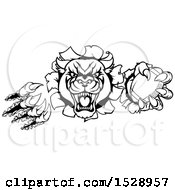 Clipart Of A Black And White Vicious Roaring Panther Mascot Shredding Through A Wall With An American Football Royalty Free Vector Illustration