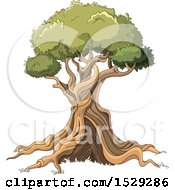 Clipart Of A Gnalred Mature Tree Royalty Free Vector Illustration