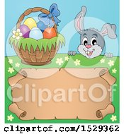 Clipart Of A Gray Easter Bunny Rabbit Over A Blank Parchment Scroll Royalty Free Vector Illustration