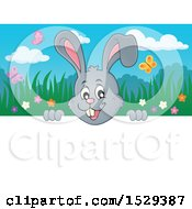 Clipart Of A Gray Bunny Rabbit Peeking Over A Sign Royalty Free Vector Illustration