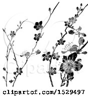 Poster, Art Print Of Black And White Cherry Blossom Branches Background