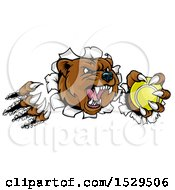 Clipart Of A Vicious Aggressive Bear Mascot Slashing Through A Wall With A Tennis Ball In A Paw Royalty Free Vector Illustration
