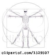 Leonard Da Vincis Skeleton Vitruvian Man