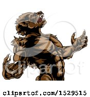 Clipart Of A Werewolf Beast Howling And Transforming Royalty Free Vector Illustration by AtStockIllustration