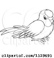 Poster, Art Print Of Black And White Cute Pet Budgerigar Parakeet Bird
