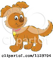 Cute Brown Puppy Dog