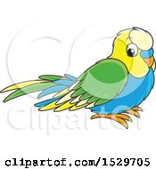 Poster, Art Print Of Cute Pet Budgerigar Parakeet Bird