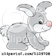 Cute Gray Bunny Rabbit