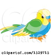 Poster, Art Print Of Cute Pet Budgerigar Bird