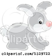 Cute Gray Rabbit
