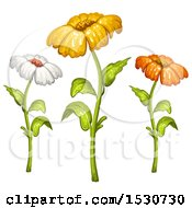 Poster, Art Print Of Trio Of Daisy Flowers