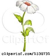 Poster, Art Print Of White Daisy Flower