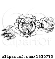 Clipart Of A Black And White Vicious Roaring Panther Mascot Shredding Through A Wall Royalty Free Vector Illustration