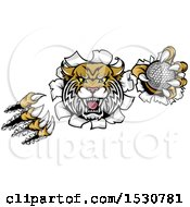 Clipart Of A Vicious Wildcat Mascot Shredding Through A Wall With A Golf Ball Royalty Free Vector Illustration by AtStockIllustration