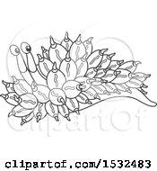Black And White Sea Slug Nudibranch