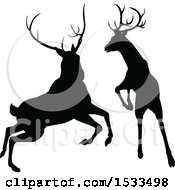 Clipart Of Black Silhouetted Deer Stag Bucks Rutting Royalty Free Vector Illustration