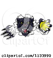 Clipart Of A Black Panther Mascot Shredding Through A Wall With A Tennis Ball Royalty Free Vector Illustration by AtStockIllustration