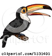 Sketched Perched Toucan Bird
