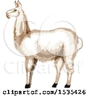 Clipart Of A White Llama Royalty Free Vector Illustration by Vector Tradition SM