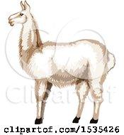White Llama