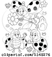 Black And White Ladybugs